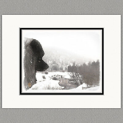 Keeshond Shadows Creek Original Art Print 8x10 Matted to 11x14