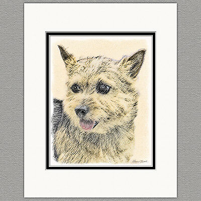 Norwich Terrier Dog Original Art Print 8x10 Matted to 11x14