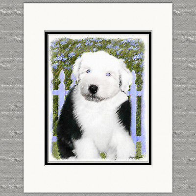 Old English Sheepdog Original Art Print 8x10 Matted to 11x14