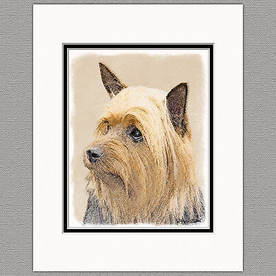 Silky Terrier Australian Dog Original Art Print 8x10 Matted to 11x14