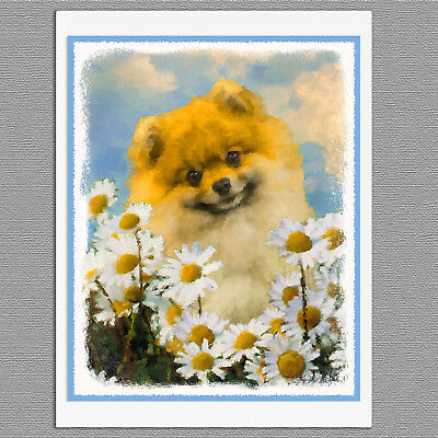 6 Pomeranian in Daisies Orange Pom Blank Art Note Greeting Cards