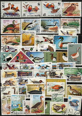 Unusual Collection Of 50- Different Postage Stamps Showing Ducks And Geese!