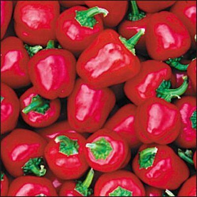 Vegetable Sweet Pepper Mini Bell Red 100 Finest Seeds