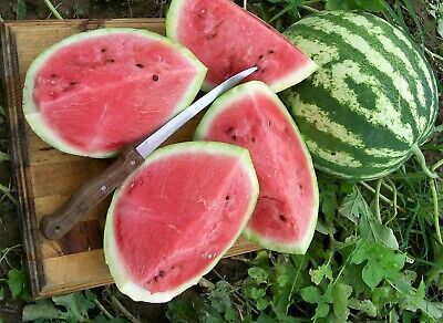 Organic Vegetable  Water Melon Crimson Sweet  30 Seeds