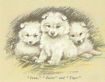 Samoyed Puppy - MATTED Dog Print - Lucy Dawson
