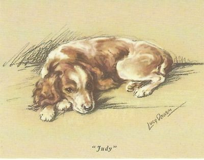 Welsh Springer Spaniel Puppy - MATTED Dog Print - Lucy Dawson