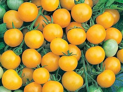 Tomato Cherry - Honeybee F1 - 40 Finest Seeds