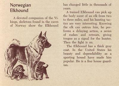 Norwegian Elkhound - Vintage Dog Print - 1954 M. Dennis