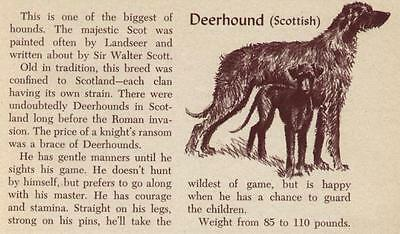Scottish Deerhound - Vintage Dog Art Print - 1954 M. Dennis