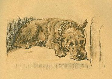 Irish Terrier - Vintage Dog Print - 1937 L. Dawson