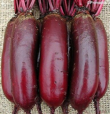 Vegetable  Beetroot Cylindra   700 Finest Seeds  ** Free Uk P&P**
