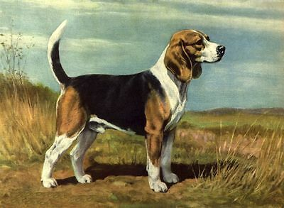 Beagle - Dog Art Print - Megargee MATTED