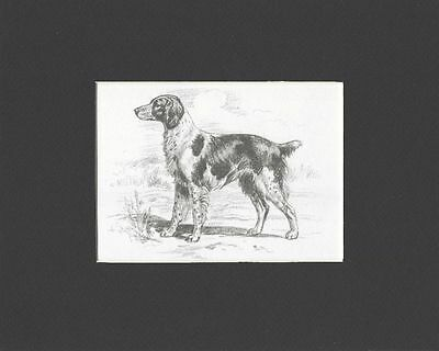 Brittany Spaniel - Dog Art Print - Megargee MATTED