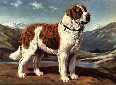 Saint Bernard - Dog Art Print - Megargee MATTED