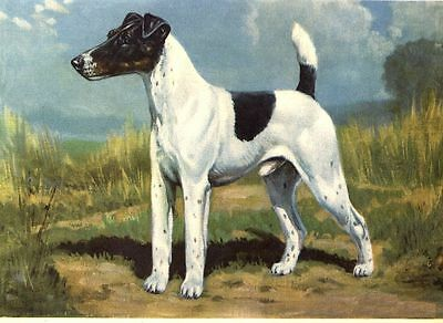 Smooth Fox Terrier - Dog Art Print - Megargee MATTED