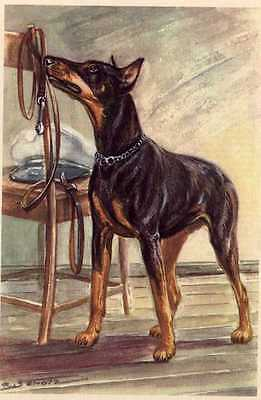 Doberman Pinscher - MATTED Dog Art Print - German / NEW U