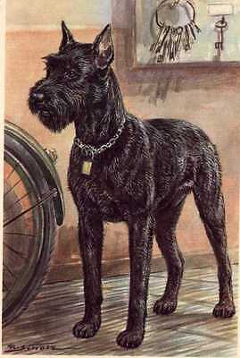 Giant Schnauzer - MATTED Dog Art Print - German / NEW U