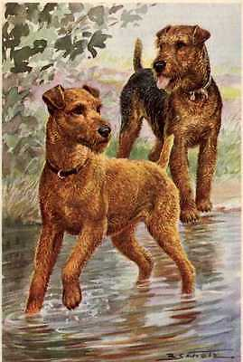 Irish and Welsh Terrier - MATTED Dog Art Print - German / NEW U