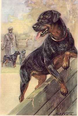 Rottweiler - MATTED Dog Art Print - German / NEW U
