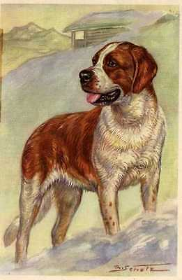 Saint Bernard - MATTED Dog Art Print - German / NEW U
