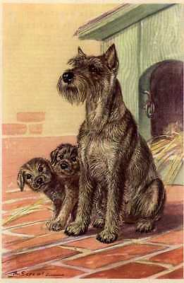 Schnauzer - MATTED Dog Art Print - German / NEW U