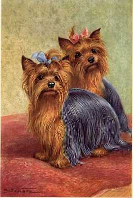Yorkshire Terrier - MATTED Dog Art Print - German / NEW U