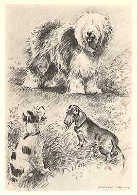 Old English Sheepdog w/Friends - Dog Print - Dennis