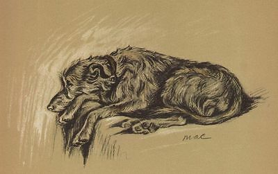 Scottish Deerhound - Lucy Dawson Dog Print - MATTED