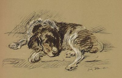 Welsh Springer Spaniel - Lucy Dawson Dog Print - MATTED