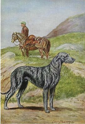 Scottish Deerhound - Vintage Color Dog Print - MATTED