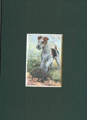 * Wire Fox Terrier - Dog Art Print - CLEARANCE