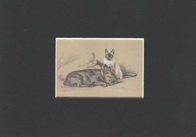 -- French Bulldog w/Cat - Dog Print - Dawson CLEARANCE