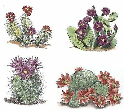 4 Blooming Desert Cactus Cacti Select-A-Size Waterslide Ceramic Decals Tx
