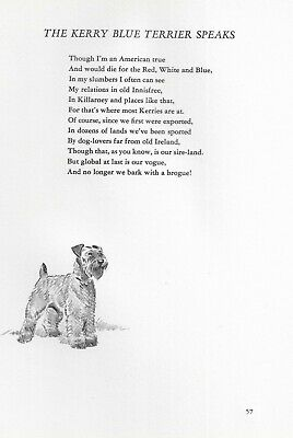 Kerry Blue Terrier Illustration and Poem - 1947 Dennis