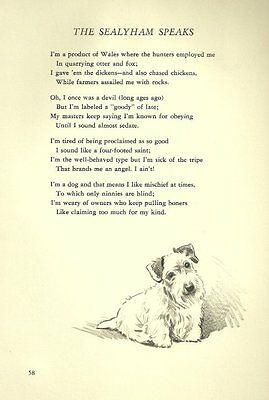 Sealyham Terrier Illustration and Poem - 1947 M. Dennis