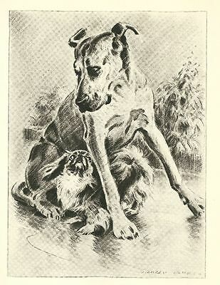 Great Dane - Vintage Dog Print - 1946 Dennis