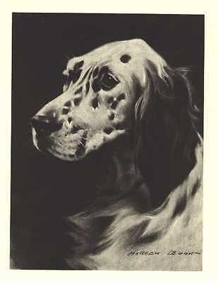 "English Setter - Dog Art Print - M. Dennis ""N"""