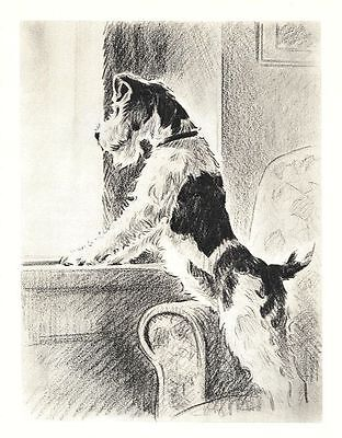 "Wire Fox Terrier - Dog Art Print - M. Dennis ""N"""