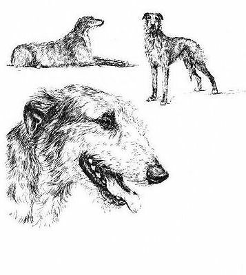 Scottish Deerhound - 1963 Vintage Dog Print - Matted *