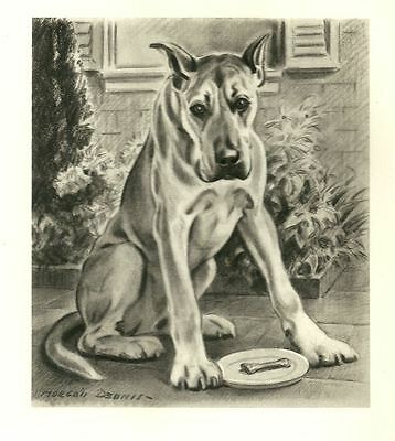 Great Dane - Vintage Dog Print - 1947 M. Dennis