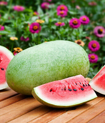 Vegetable  Water Melon Charlston Gray  60 Finest Seeds
