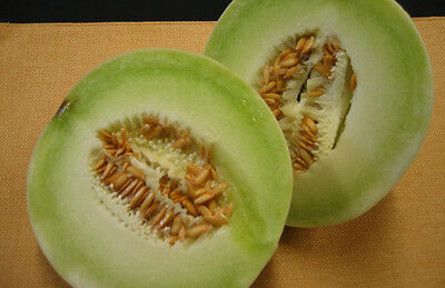 Melon  Honeydew  100 Finest Seeds