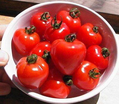 Vegetable Tomato Tomatoberry F1 5 Finest Seeds