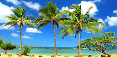 Tropical beach 20'x10' CP Backdrop Computer printed Scenic Background YKY-160