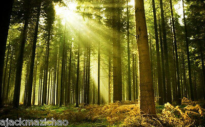 Sunshine Forest 4 Wall Paper Wall Print Decal Wall Deco Indoor wall Mural Home