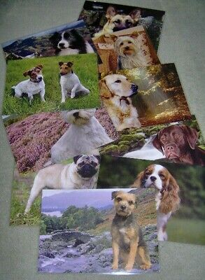 Table Mats-Pet Mats-Dogs-Cats-Horse-Donkeys-Pug-Westie-Labrador-Terriers-Collie