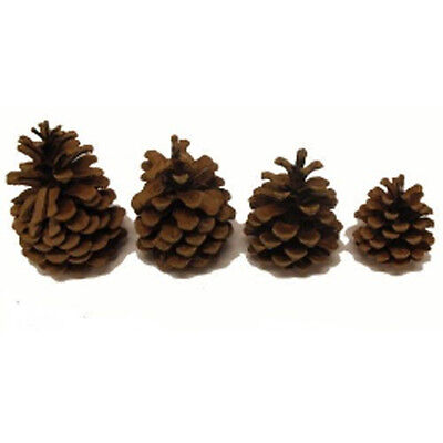 50 Real Austriaca Pine Fir Cones - Use To Decorate Christmas Wreaths & Pots