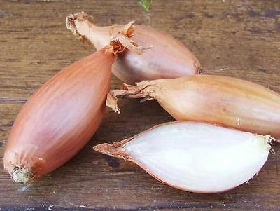 Vegetable  Shallot Zebrune  450 Finest Seeds
