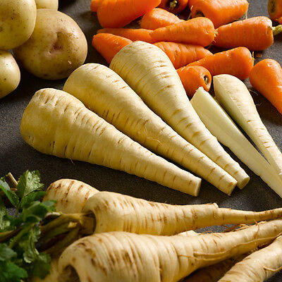 Parsnip Tender And True  1600 Seeds