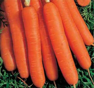 Vegetable  Carrot  Early Nantes 2 - 16 Grams ~ 12,800  Finest Seeds